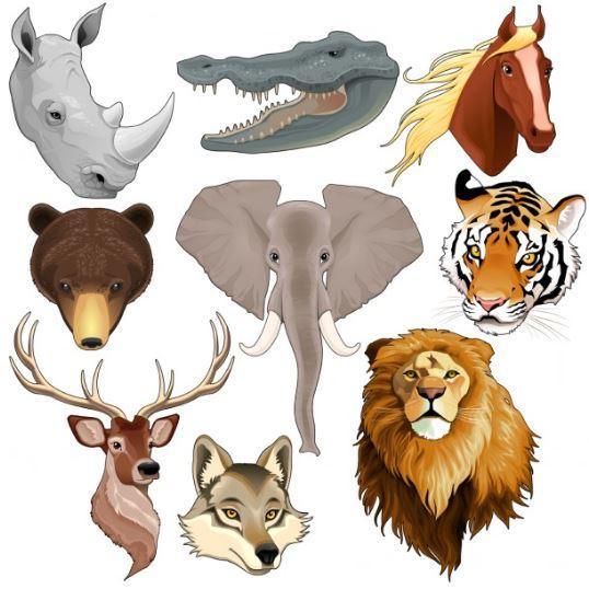 جميع  أسماء اناث و ذكور  و صغار الحيوانات