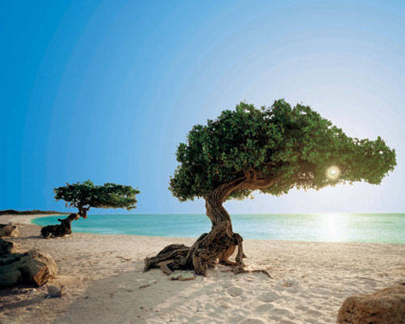 Things to do for free once you're on the beautiful island of Aruba! www.prettyprovidence.com