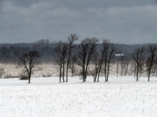 trees in a snow covered field