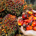 Palm Oil Production Ramps Up in Africa, Communities Work to Avoid Problems Plaguing Other Regions