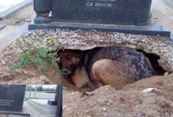 Θα δακρύσετε! Ο πιο πιστός σκύλος στον πλανήτη! Ζούσε σε λάκκο μέσα στο τάφο του αφεντικού του! (PHOTO)