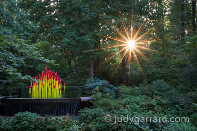 Sunflare and Chihuly Paintbrushes at ABG