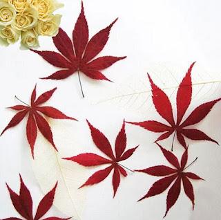En China y Japón la hoja de Arce es el emblema de los enamorados