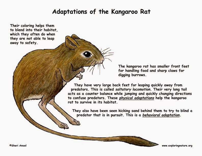 MarkulinTags: Animal Adaptations