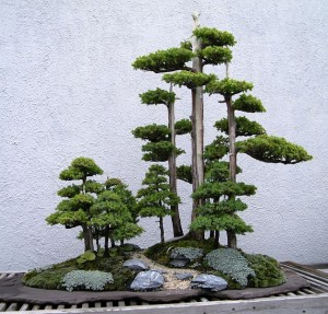 Bonsai Tree Types Juniper Bonsai Care