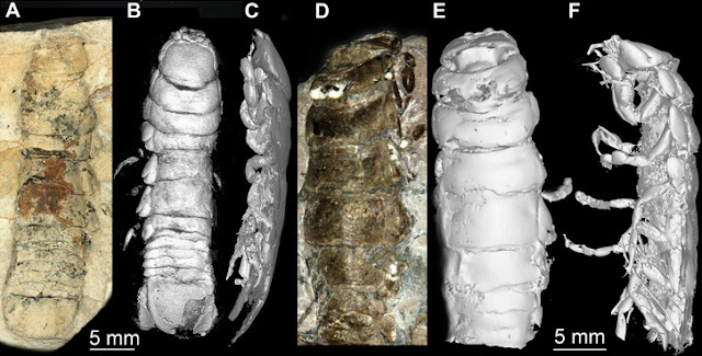 The oldest known parasitic isopod