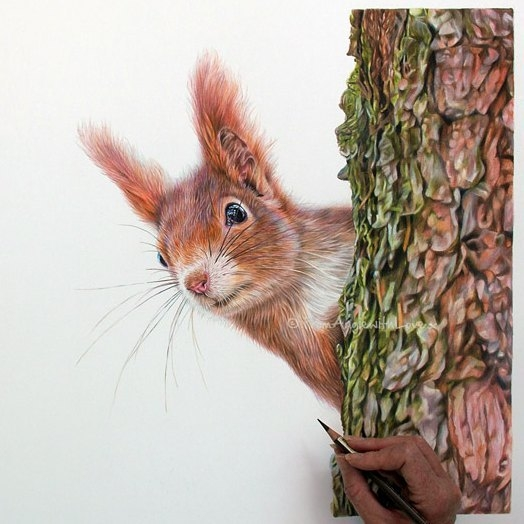 04-Red-Squirrel-Angie-A-Pet-and-Wildlife-Pencil-Drawing-Artist-www-designstack-co