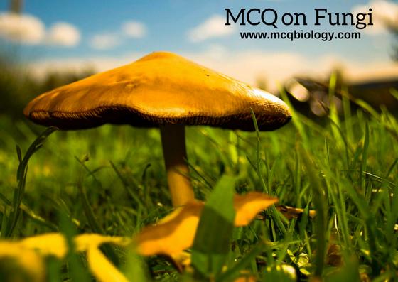 MCQ on Fungi - mushroom