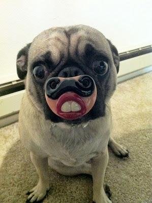 perro con boca enorme
