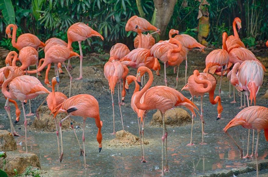 Chiêm ngưỡng những bức ảnh chim hồng hạc đẹp nhất trên thế giới (phần 1), in hồng hạc