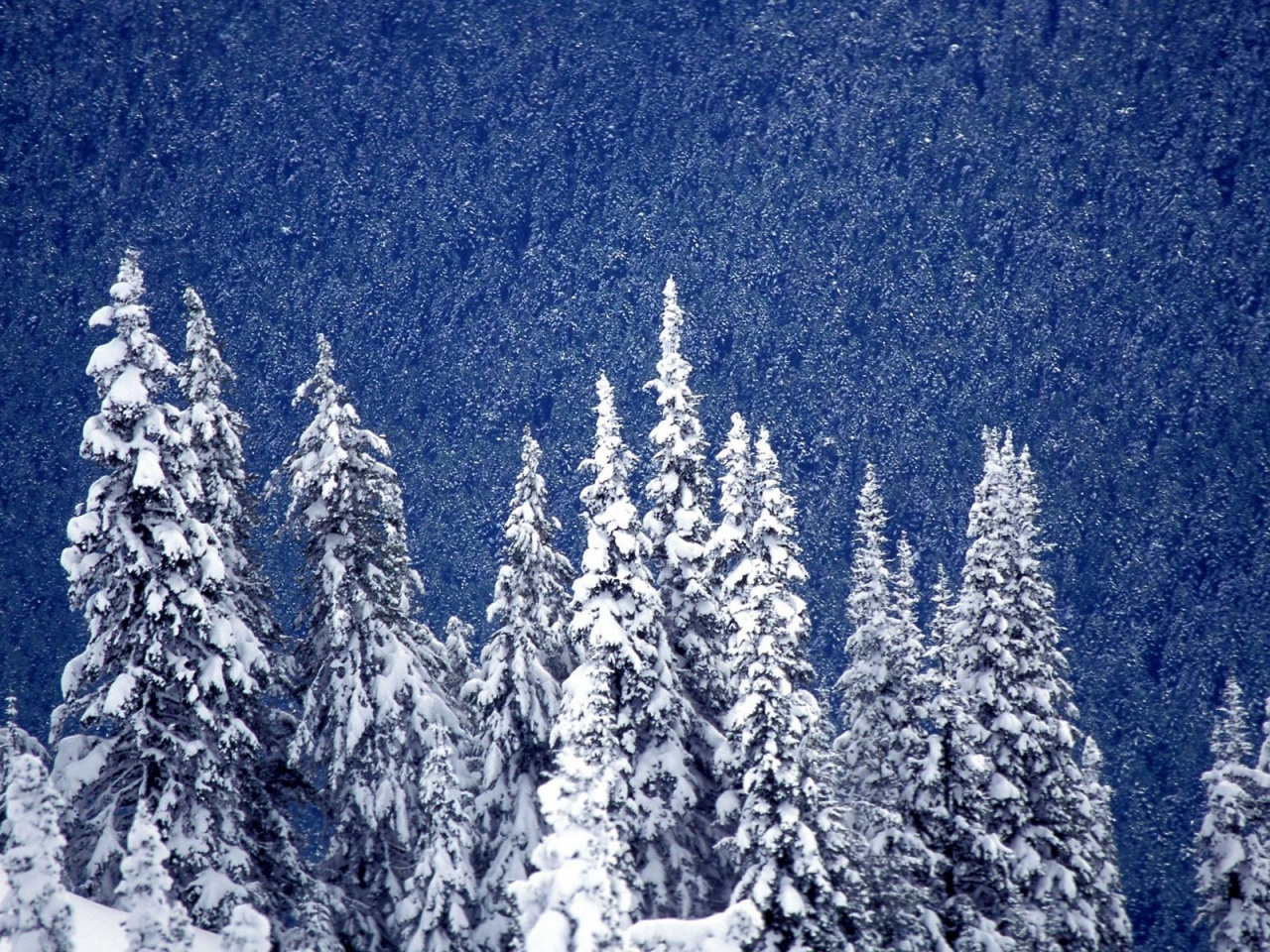 Free Animated Desktop Wallpaper Like Snow Falling On Background Hero Raindrops Falling