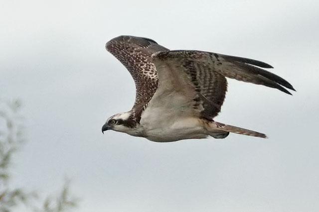 the tall birder radley lakes 16