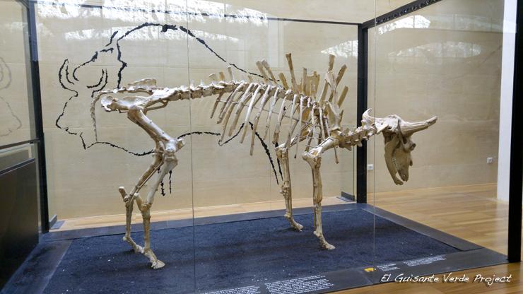 Museo Nacional de Prehistoria, Les Eyzies de Tayac - Dordoña Perigord