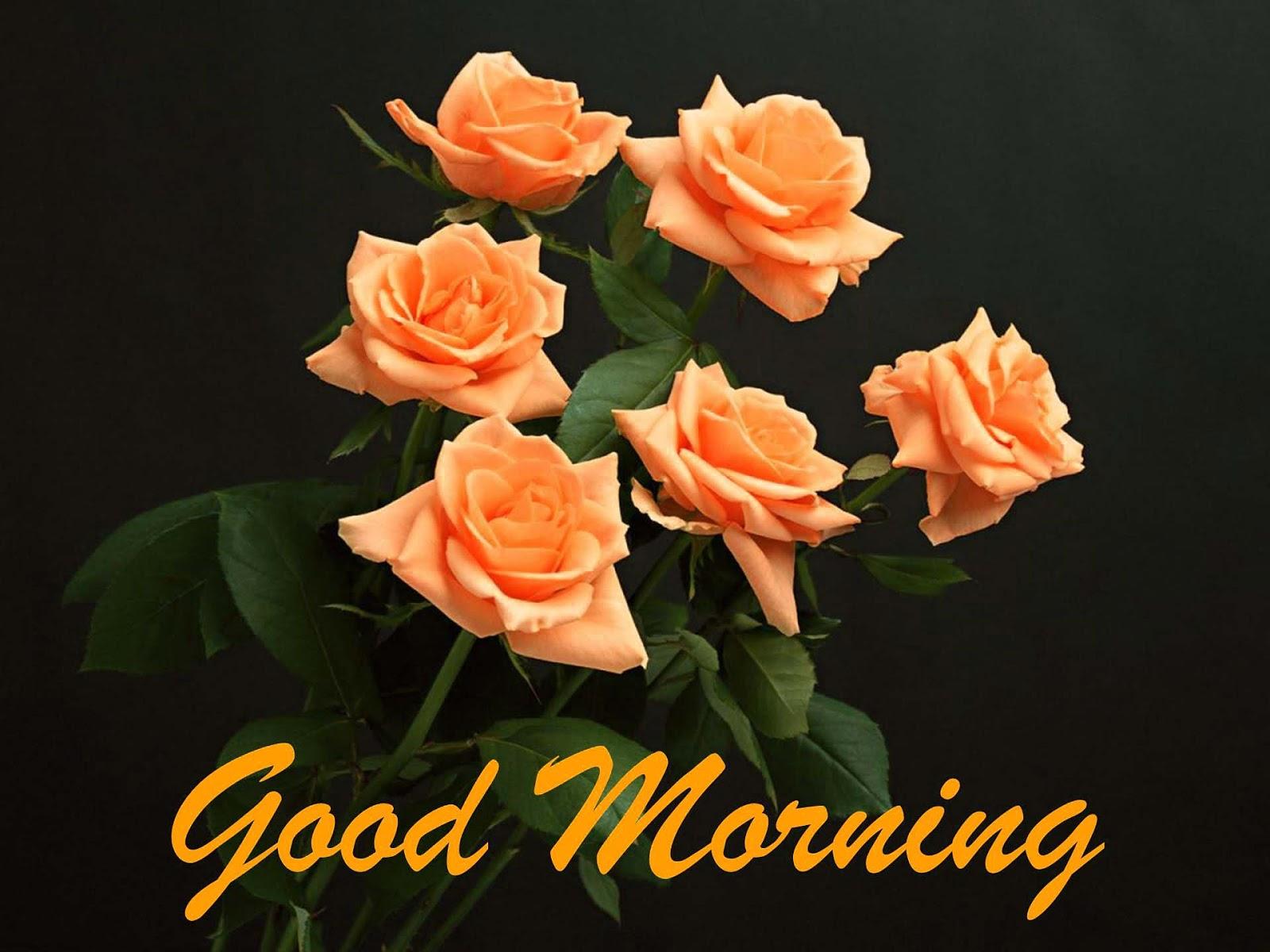 Good Morning Orange Flowers : Allfreshwallpaper lovely and beautiful good morning