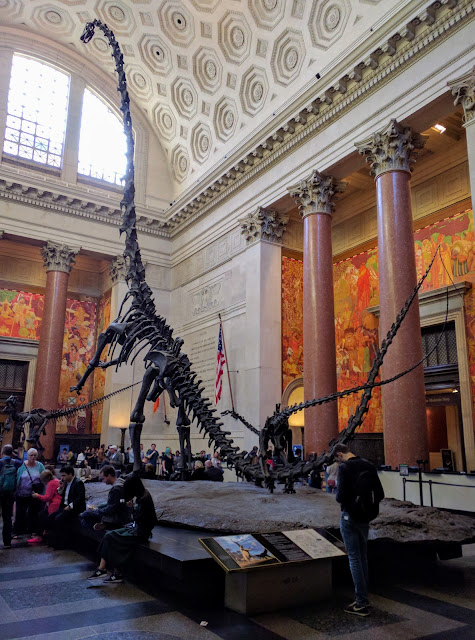 Barosaurus with kaatedocus, American Natural History Museum, NYC