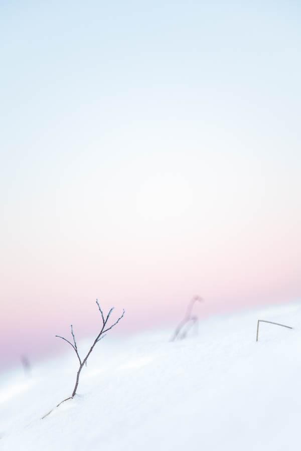 Kaamoksen värejä Muoniossa