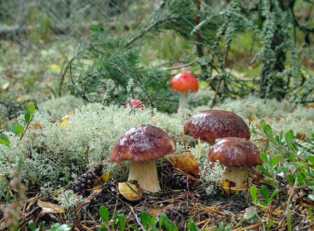 Открытки с грибами лесными