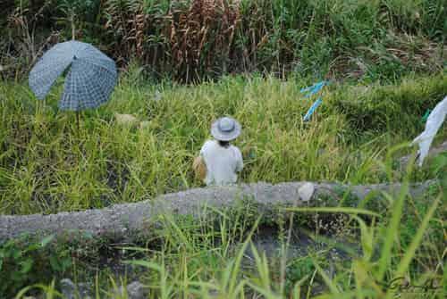 Batad Rice Terraces Trail