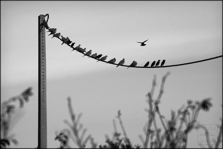 aves,cable,valencia,fotografia,pajaros