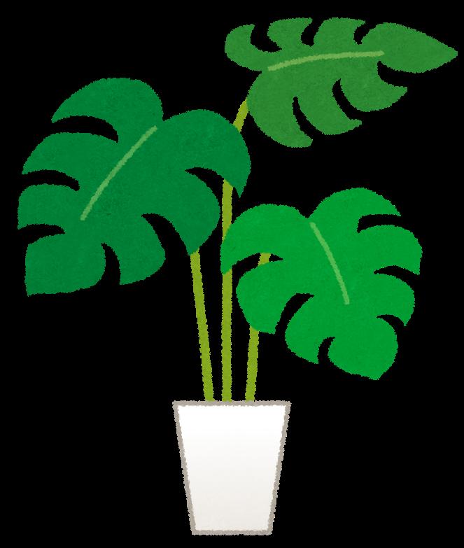 モンステラのイラスト観葉植物 かわいいフリー素材集 いらすとや