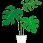 モンステラのイラスト(観葉植物)