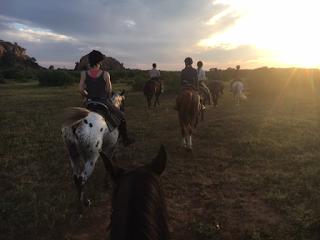 safari, mashatu, botswana, ratsastus, hevonen, riitta reissaa