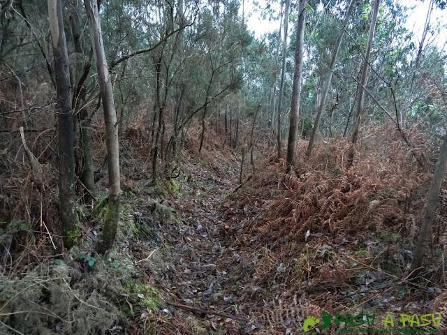 Alto la Corona o Pico La Ablanosa: Sendero entre la vegetación del bosque