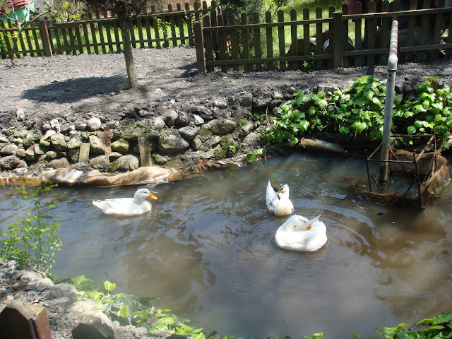 Küçük göletteki ördekler, Naturel Park Restoran, Sapanca