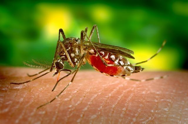 Cegah Demam Berdarah ! Begini 8 Cara Mengusir Nyamuk Dirumah Dengan Bahan Alami