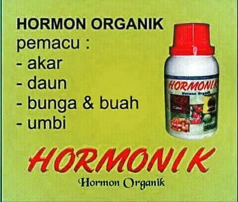 Hasil gambar untuk hormonik nasa