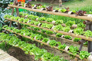 Backyard Hydroponics Gardening Ideas