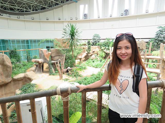 giant panda fu wa
