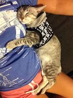 Anak Kucing Menggemaskan Tidur Dengan Majikan