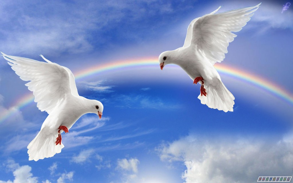 Awesome  Beautiful wallpapers OF Pigeon In HD  For More