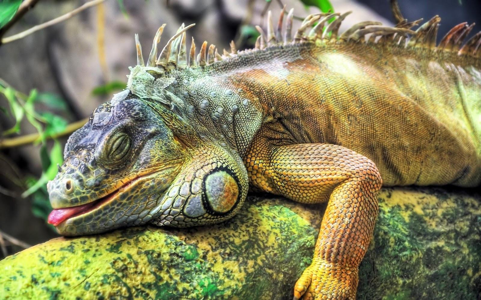 Kuching Iguana Club: January 2013