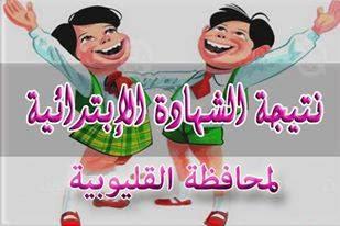 وظائف مصرية - نتيجة الامتحانات - القليوبية