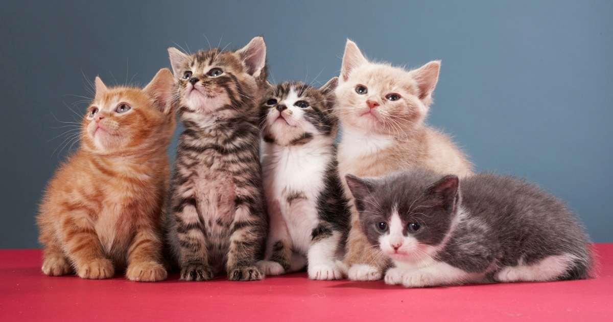 gambar anak-anak kucing yang comel