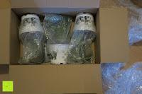 kleine Pflanzen: Katzengras - Cyperus alternifolius - 3 Pflanzen - zur Verdauungsunterstützung von Katzen