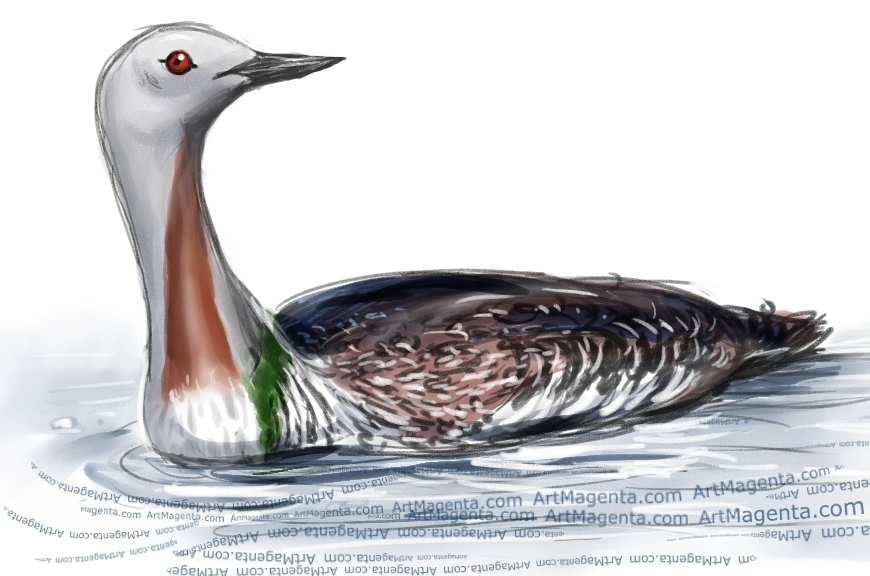 Red-throated Loon  sketch painting. Bird art drawing by illustrator Artmagenta