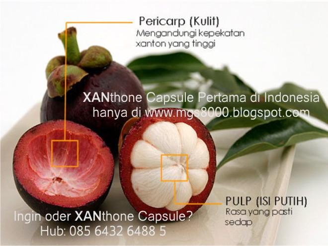 Manfaat Kesehatan Buah Manggis (Tak Perlu Ekstraknya)