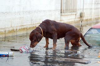 pets hurricane, pets, danger