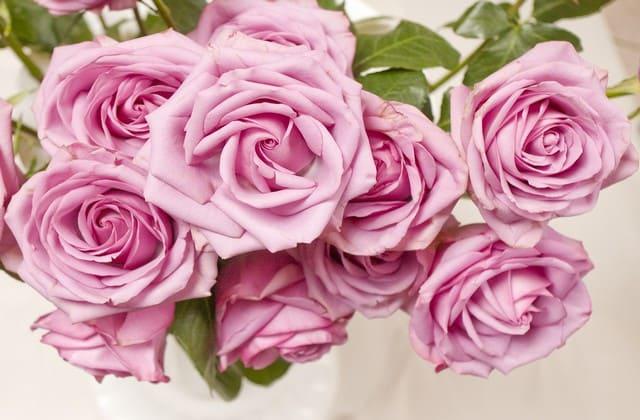 Mawar pink sedang paling cocok untuk diberikan ke teman yang sedang sakit atau berduka