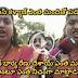 Roja Comments On Pawan Kalyan And Chiranjeevi