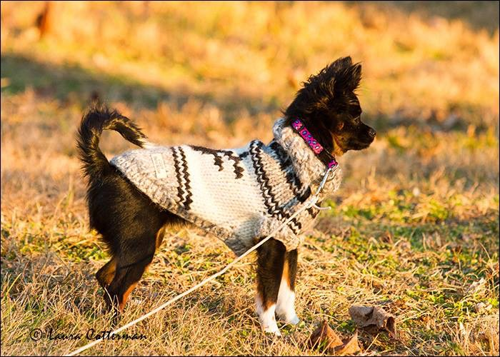 JOSSY , Hand,Knitted Dog Sweaters COWICHAN INDIAN SWEATERS