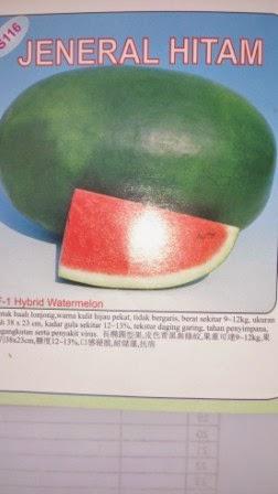 buah keras,tahan simpan,tahan pecah,Daging merah, tahan angkut, cepat panen,rasa manis,murah,inul