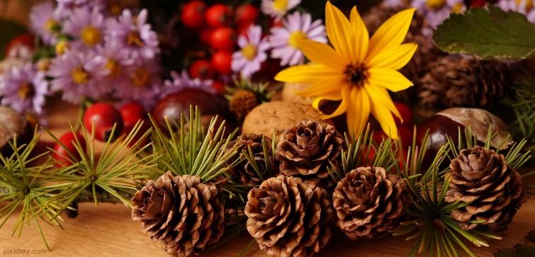 Zapfen und Herbstblumen
