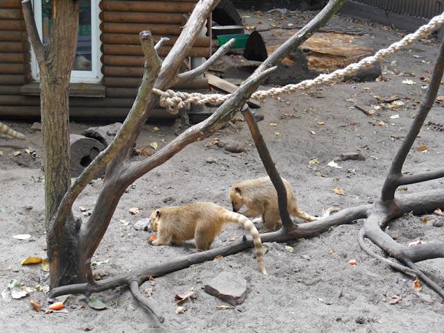 zwierzęta w zoo Nowy Tomyśl, wybiegi, liny, klatki
