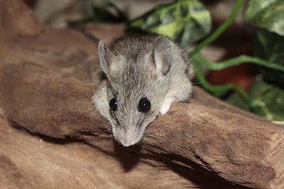 https://www.bimapedia.com/2018/12/cara-mengusir-tikus-dengan-beberapa-hal.html