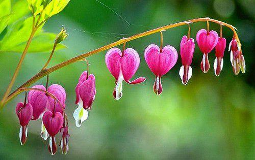 hình ảnh hoa đẹp nhất thế giới 12
