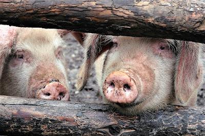 Becurile cu infraroșu pentru ferme, de la Superfarmland.com